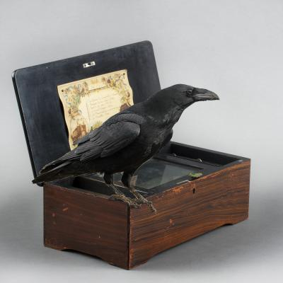 Corbeau musical box